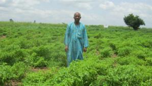 Un bénéficiaire du programme PANA sur son champ de piment. Photo: AT