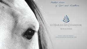 Photo © Haras de Chandor. Cliquez ici pour accéder au site