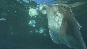 Photo (c) Gavin Parsons / Greenpeace. Cliquez ici pour accéder à la proposition concernant les plastiques