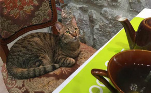 Nice's Cat Café. Photo (c) CdB