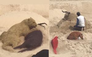 Sculpture de sable pour une exposition à ciel ouvert