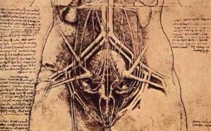 L'appareil urino-génital détaillé par Léonard de Vinci, en 1507. Image du domaine public.