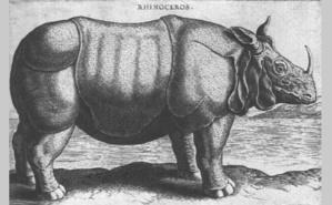 Abada, le rhinocéros de Philippe II gravé par Philippe Galle. Image du domaine public.