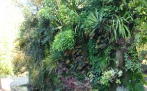 Mur végétal au Domaine de Chaumont-sur-Loire. Photo (c) Amélie Hubert