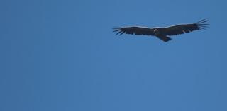 Argentine et fonds vautours, fin d'un feuilleton judiciaire