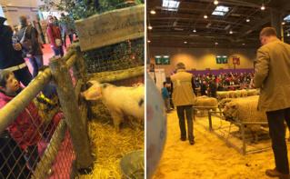 Un porc sous le regard d'enfants et adultes (à gauche) et la vente aux enchères de moutons (à droite). Photo (c) J.Claude M.
