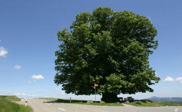 Les arbres sont les alliés de notre agriculture. Photo © Stefan Wernli