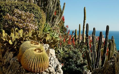 Photo (c) Jardin exotique de Monaco