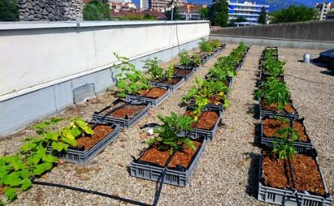Cultures potagères sur le toit de la Casemate (Grenoble). Photo © Cultivons nos toits