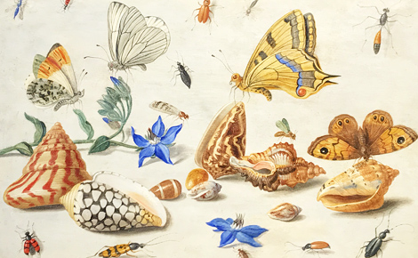 "Jan Van Kessel: ""Study of Butterflies"". Photo (c) Charlotte Service-Longépé"