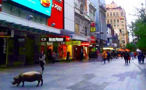 Apperçu de la ville d'Adelaide. Photo prise par Sarah Barreiros.