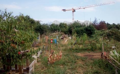 Potagers des Lentillères et construction de l'écoquartier en arrière-plan. Photo (c) PR