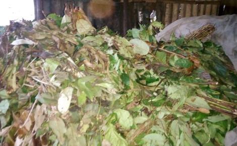 Plantes médecinales en vente au marché de Cosa (Conakry). Photo prise par Boubacar Barry