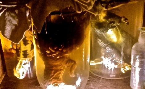 Certaines vitrines, effrayantes, présentent d'étranges animaux dans des bocaux… Photo (c) Margaux de Bourmont