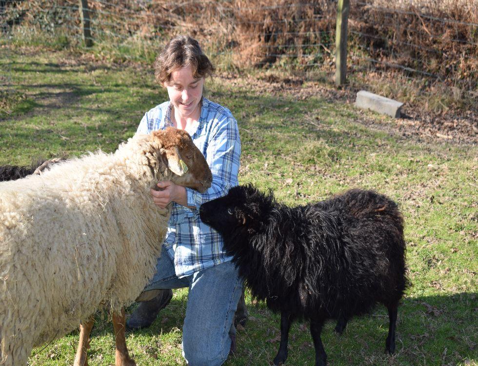 Saint-Cast le Guildo. Katell Lorre et deux de ses moutons, Sputnik et Mona Lisa. (c) Cindy Giraud.