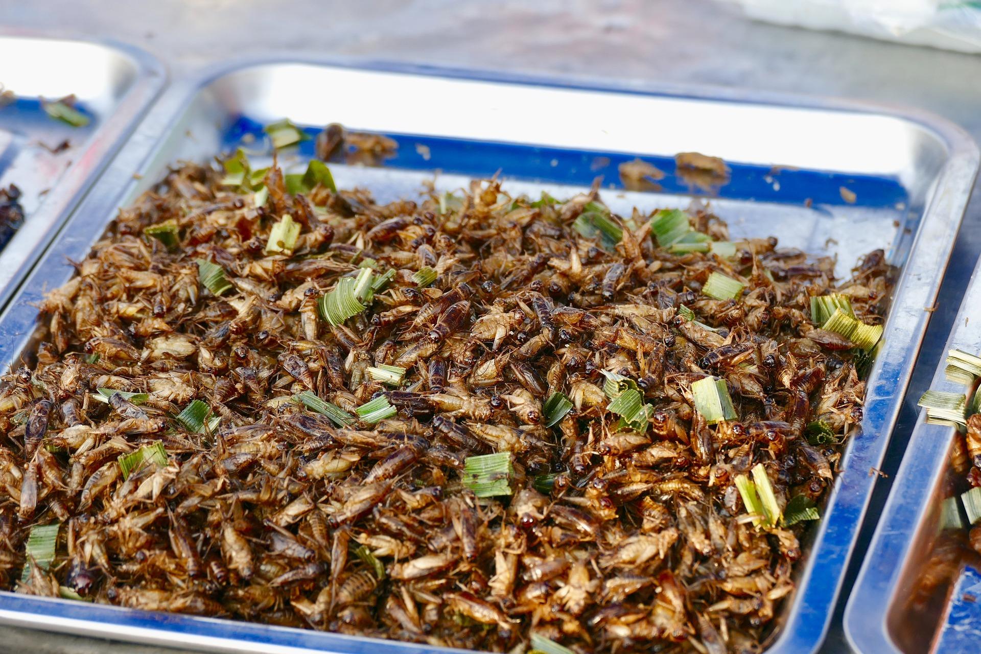 L'aquaculture est l'un des secteurs intéressé par les farines d'insectes - © PXB