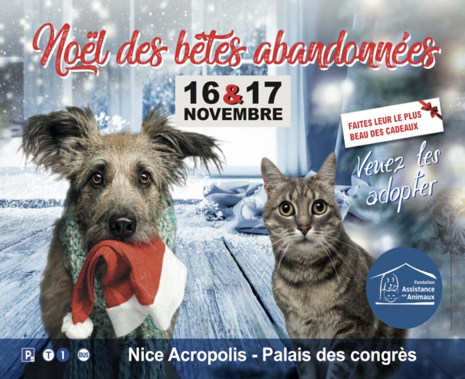 La Fondation Assistances aux Animaux organise pour la seconde fois à Nice le Noël des bêtes abandonnées (c) Fondation Assistance aux Animaux