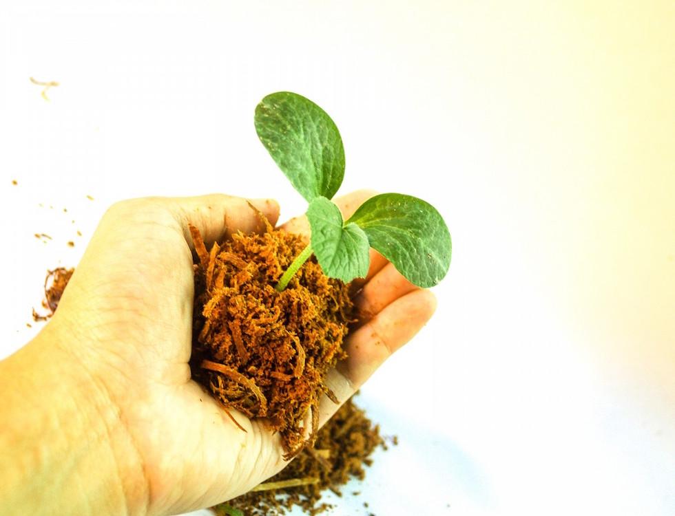 Plante poussant dans une motte de terre © pxhere CC0