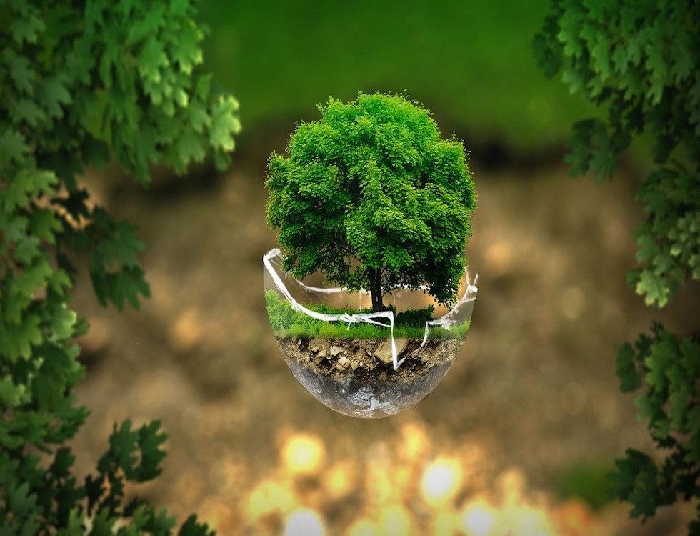 Un arbre dans une sphère en verre © Ivan Tamas Pixabay