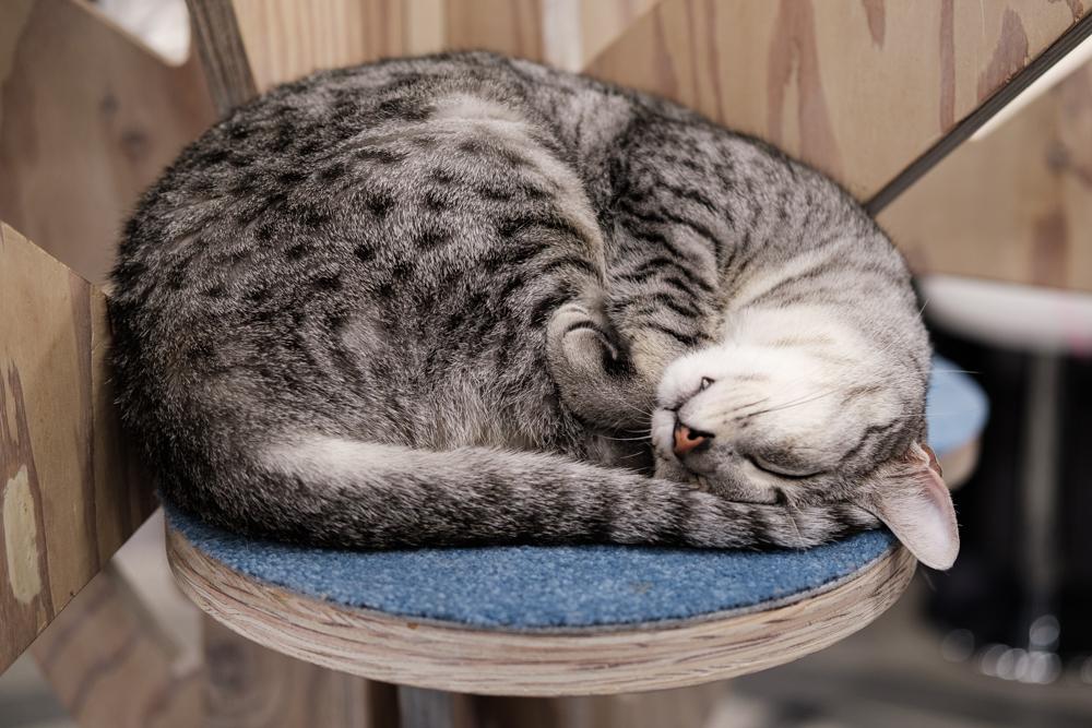 Kibi fait la sieste ©Florent Guérout