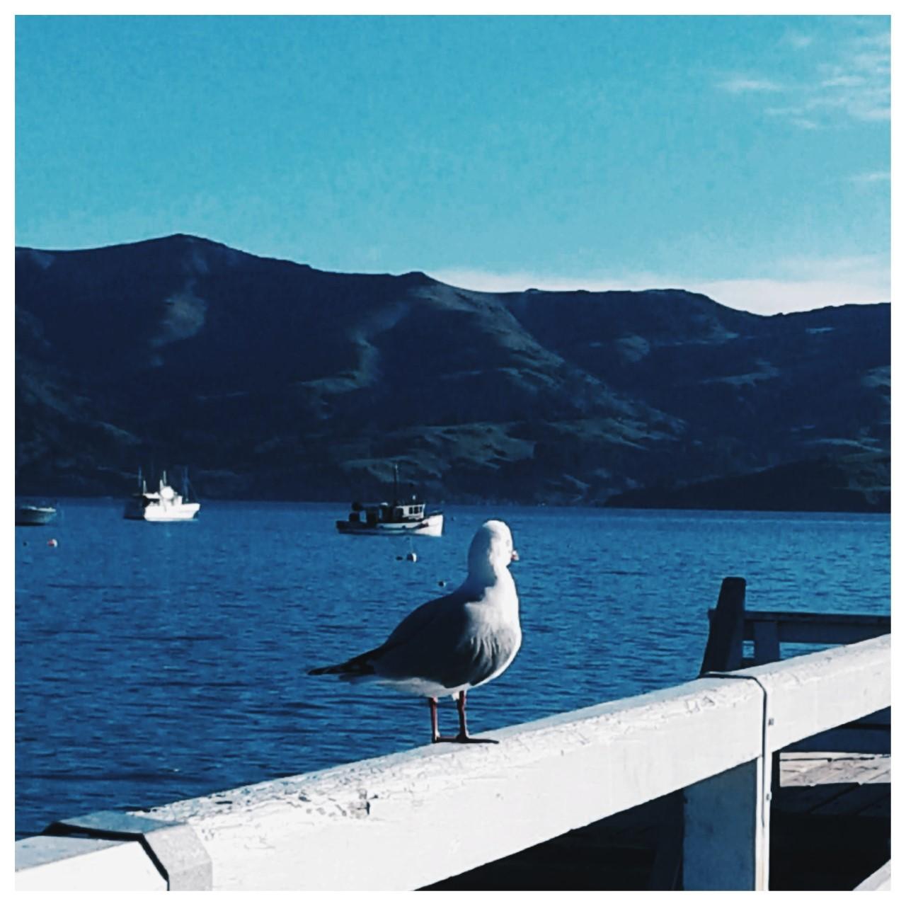 Nouvelles Zélande. (c) Sarah Barreiros.