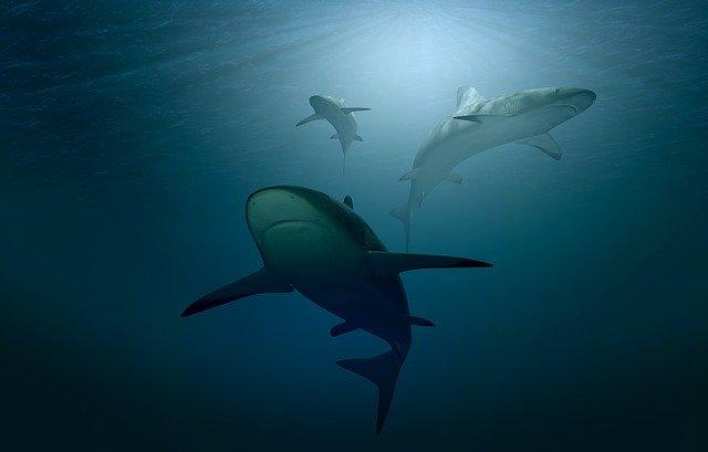 Une espèce de requin et de raie sur 4 est en voie d'extinction (c) Pixabay