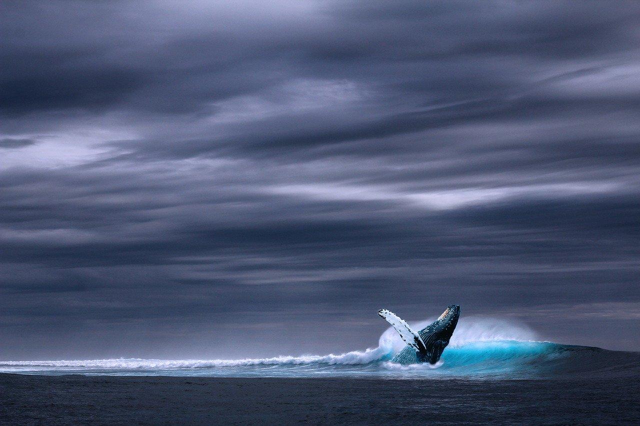 La baleine, ce cétacé qu'il faut protéger (c) Pixabay