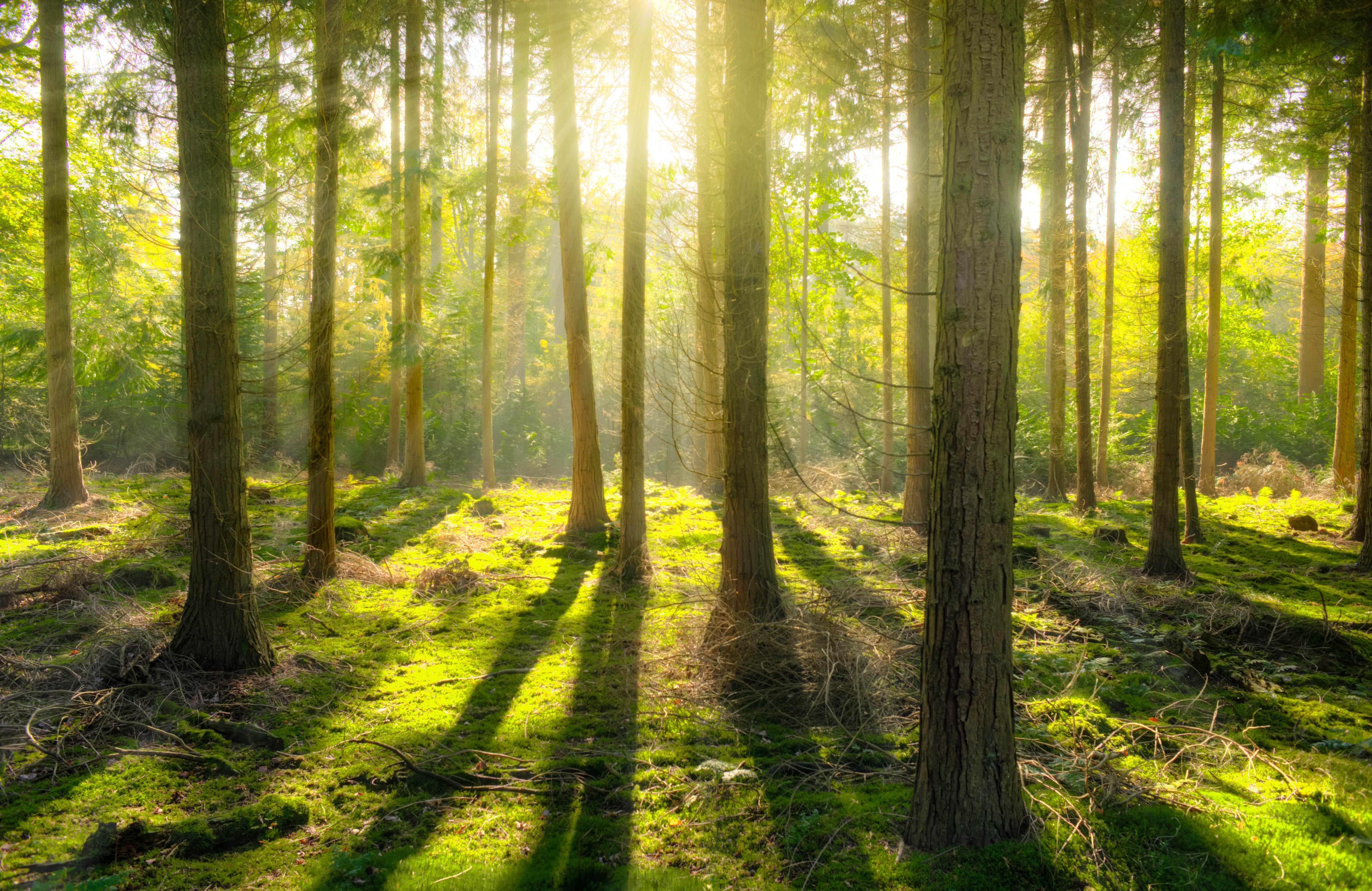 Une balade en forêt aurait des effets bénéfiques sur notre organisme - (c) pexel