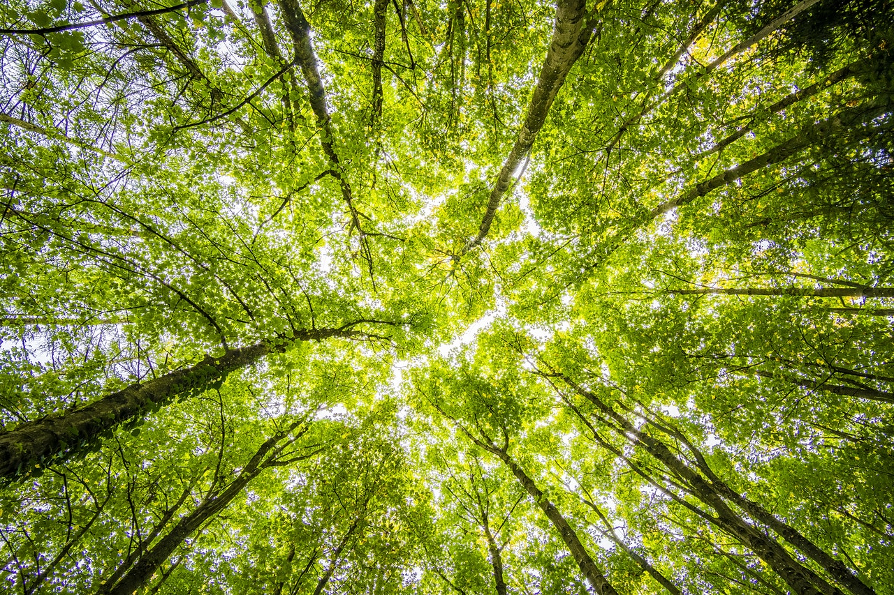 Pour inverser le cours de la déforestation et de la perte de biodiversité il est urgent de transformer en profondeur nos modes de production et de consommation alimentaires - (c) Pexels