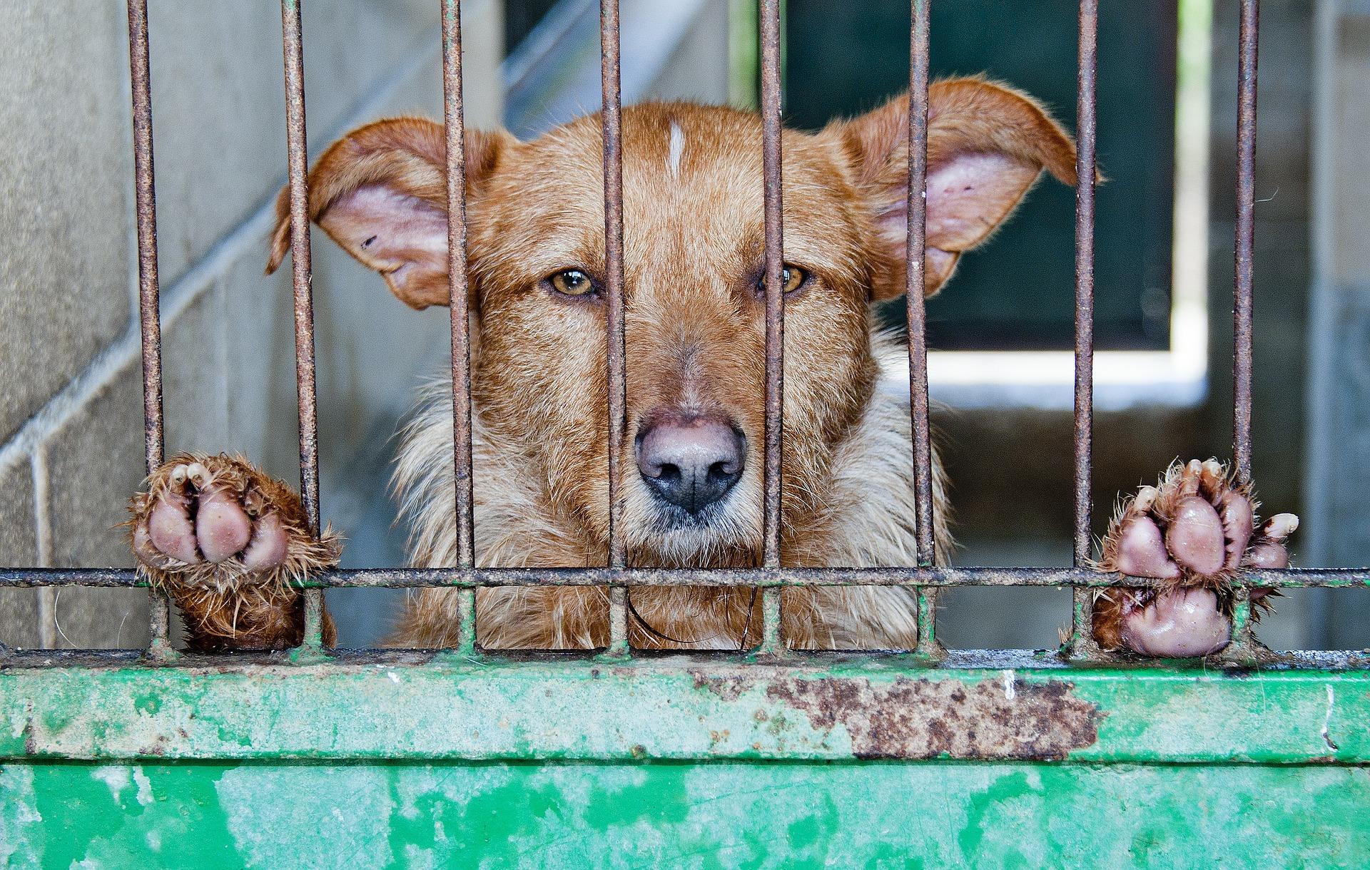 100000 animaux seraient abandonnés chaque année en France - (c) pixabay