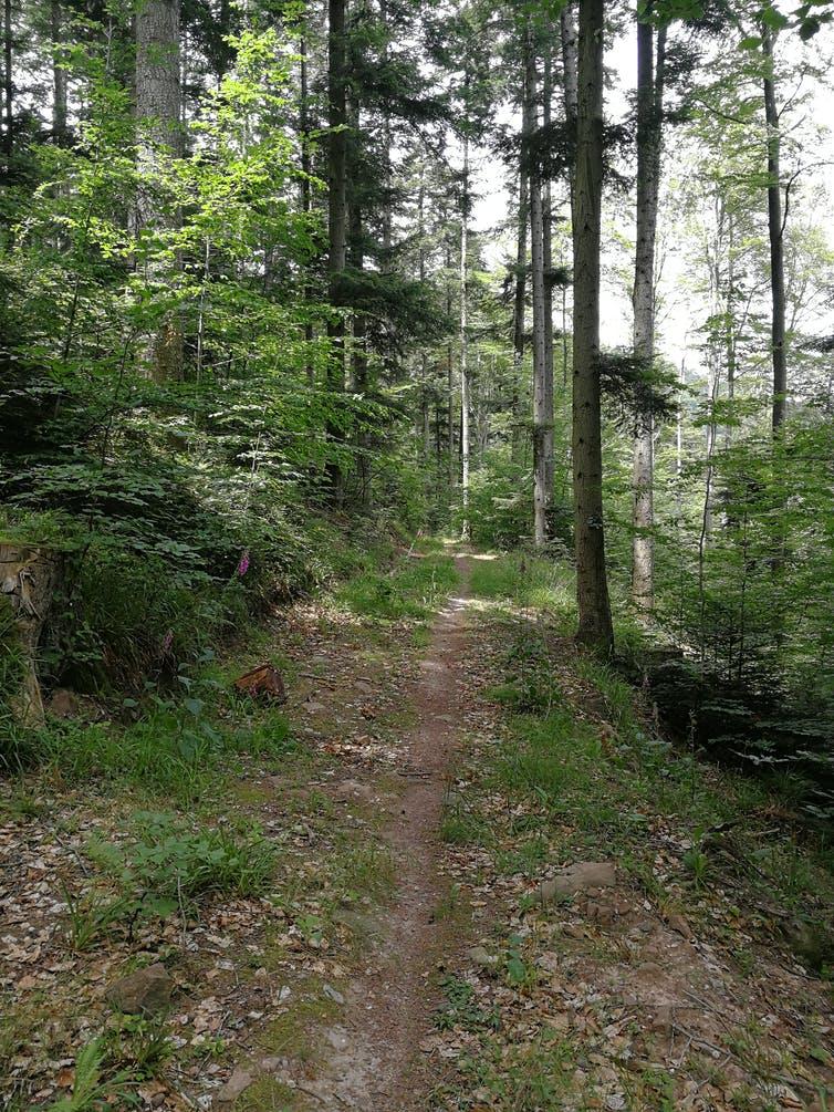 Exemple d'un écosystème apprécié par la tique Ixodes ricinus. Nathalie Boulanger, Author provided