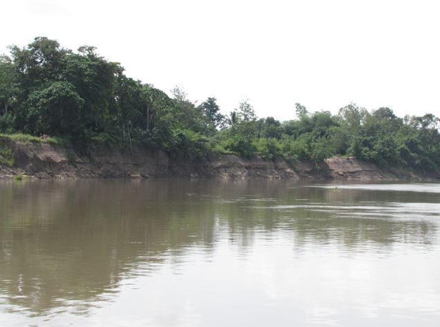 Vue d'une  forêt galerie au Bénin. Photo (c) AT