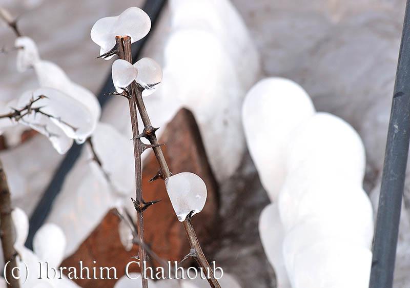 Protection glaciale! Photo (C) Ibrahim Chalhoub