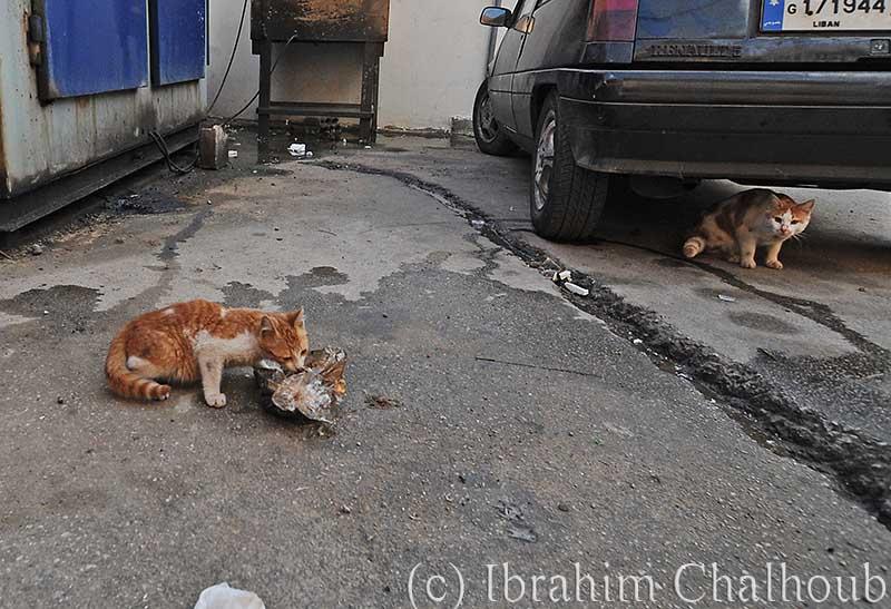 Et si tu n'existais pas! Photo (C) Ibrahim Chalhoub