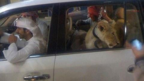 Animaux sauvage exposés publiquement à Dubai - Photo qui circule sur les réseaux sociaux