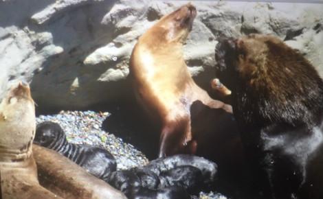 La Péninsule Valdes et ses lions de mer. Photo (c) Marie-Rachel Aparis