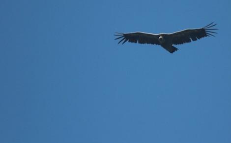 Les fonds vautours ont engrangé de grands bénéfices grace à cet accord. Photo (c) Peupleloup