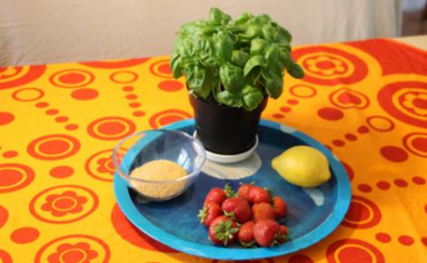 Ingrédients de la soupe de fraises au basilic. Photo (c) Alice Dutray.