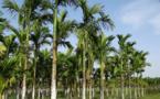 Planter un arbre en un clic avec le moteur de recherche Ecosia