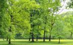 Classement 2017 des villes les plus vertes en France