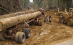 GREENPEACE: Monsieur Sarkozy, les forêts tropicales ne sont pas une « matière première » comme les autres!
