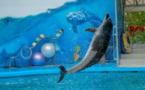Ondes de choc sur les delphinariums