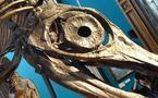 ANNA, le reptile aux grands yeux