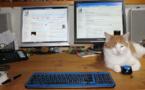 Les chats, un rempart au burn-out professionnel?