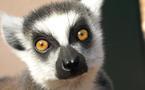 VAR : A La Londe Les Maures, le Jardin d'Oiseaux Tropicaux, conservatoire d'espèces en voie de disparition.