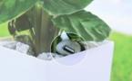 Recharger ses appareils électroniques avec des plantes
