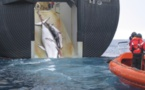 """177 baleines tuées par le Japon """"au nom de la science"""""""