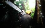 ANNEE DE LA BIODIVERSITE - Actions contre la déforestation