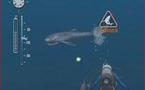 Le Wii Speak, pour commander au doigt et... à la voix, même sous la mer
