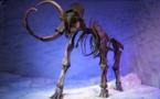 L'achat aux enchères d'un mammouth